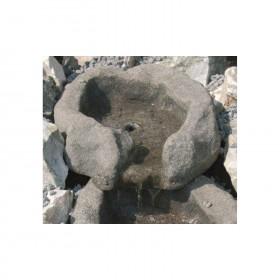 Moorauge Quelle multicolour 35-40cm